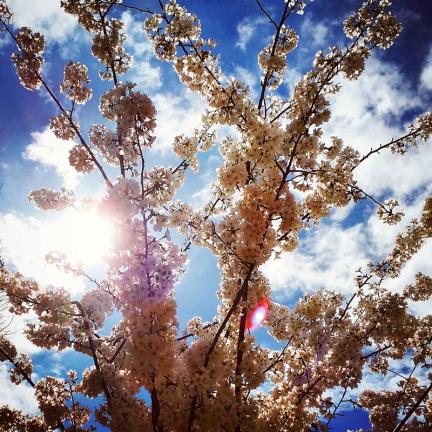 spring-sun
